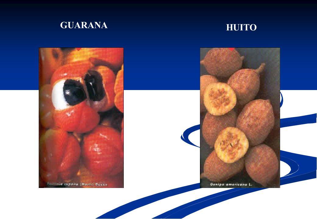 GUARANA HUITO
