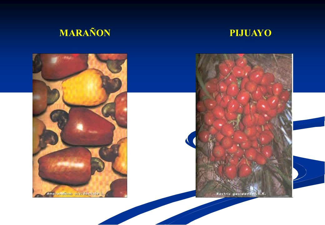 MARAÑON PIJUAYO