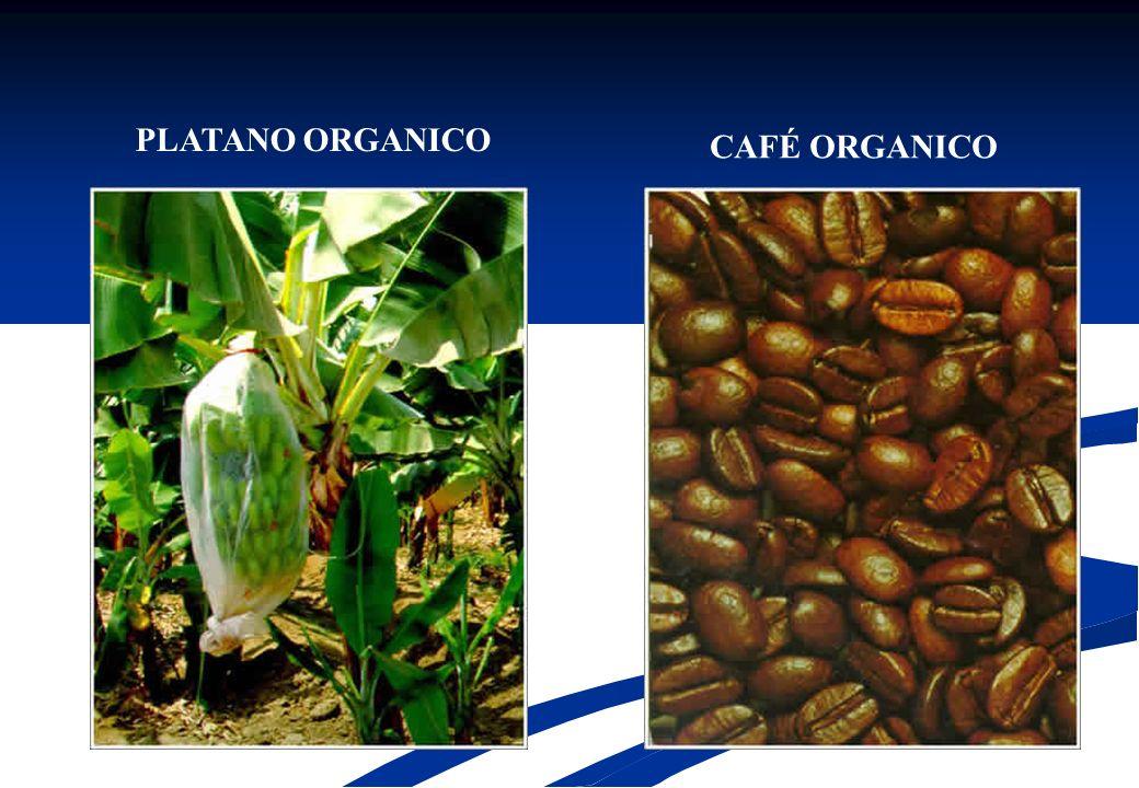 PLATANO ORGANICO CAFÉ ORGANICO