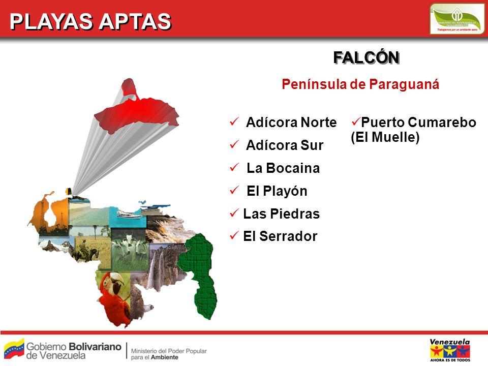 PLAYAS APTAS FALCÓN Península de Paraguaná Adícora Norte Adícora Sur