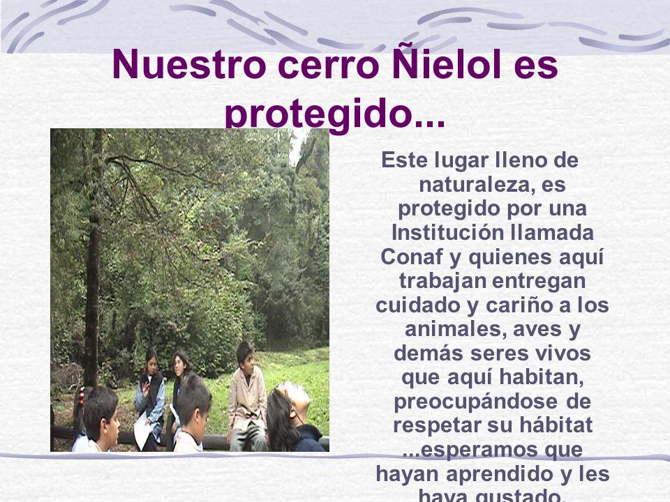 Nuestro cerro Ñielol es protegido...