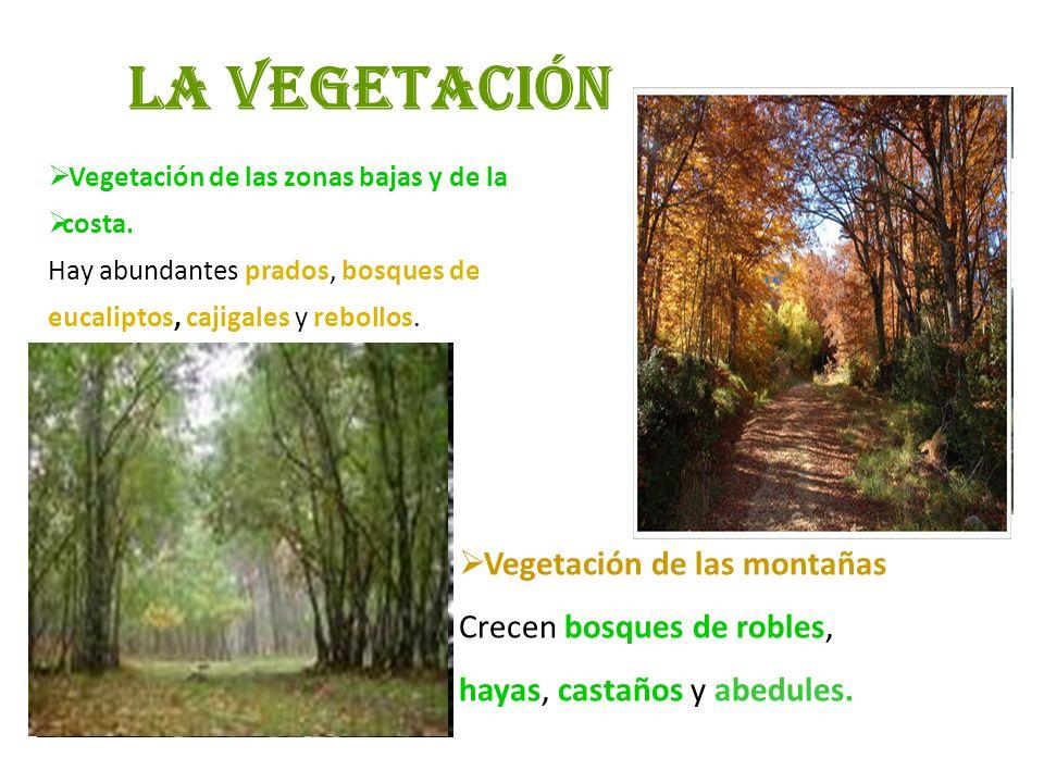 La vegetación Vegetación de las montañas Crecen bosques de robles,