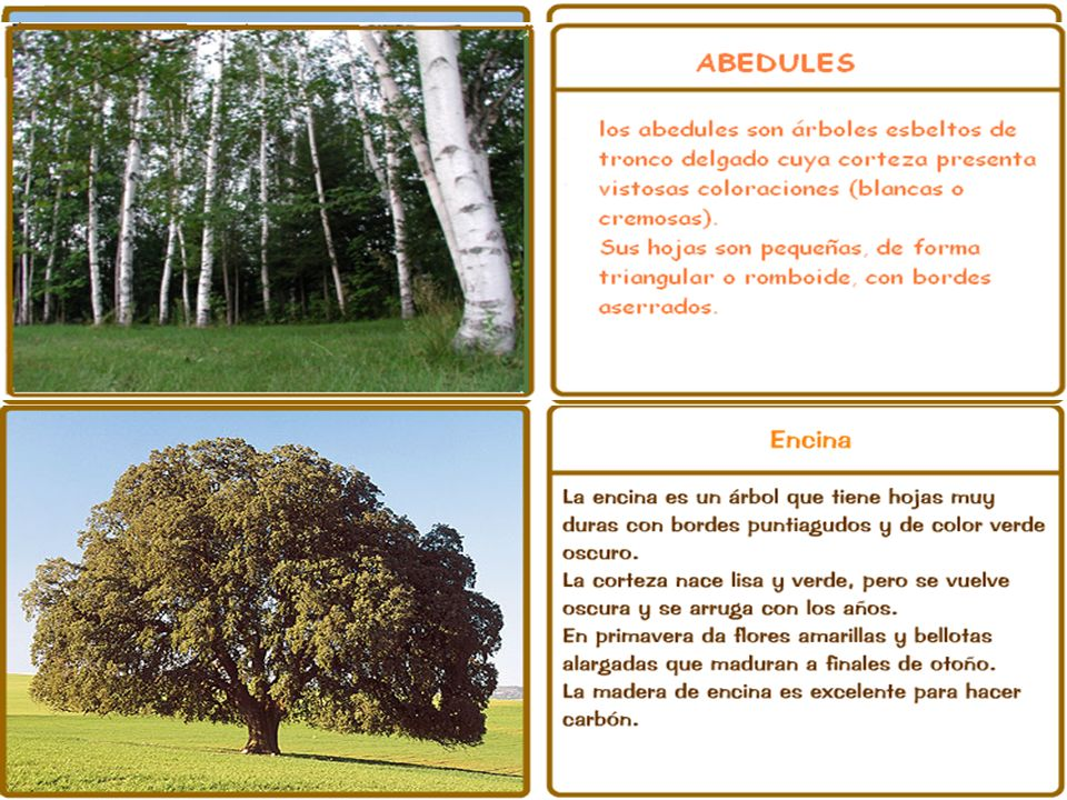 La vegetación Vegetación de las zonas bajas y de la costa.