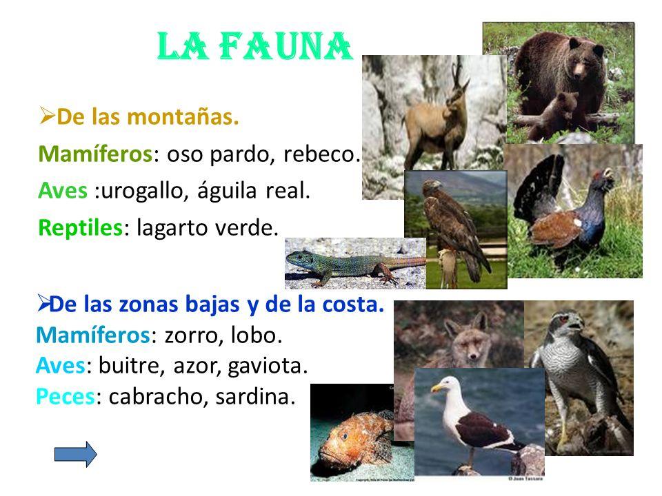 La fauna De las montañas. Mamíferos: oso pardo, rebeco.
