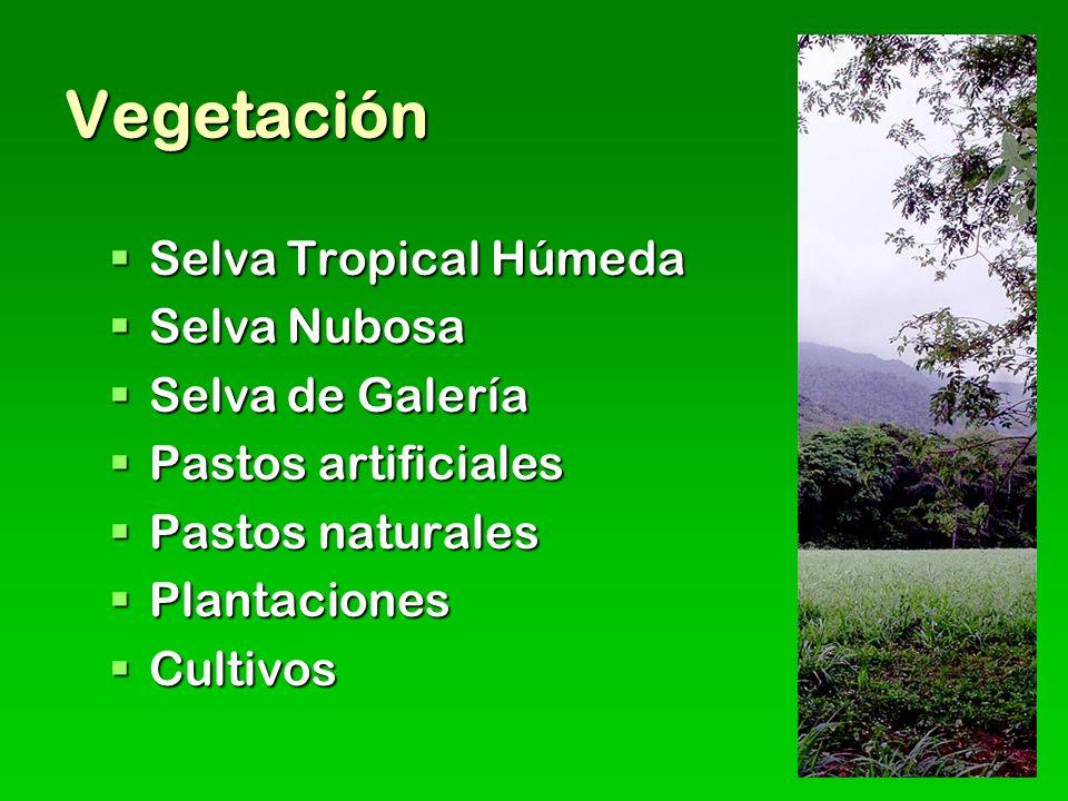 Vegetación Selva Tropical Húmeda Selva Nubosa Selva de Galería