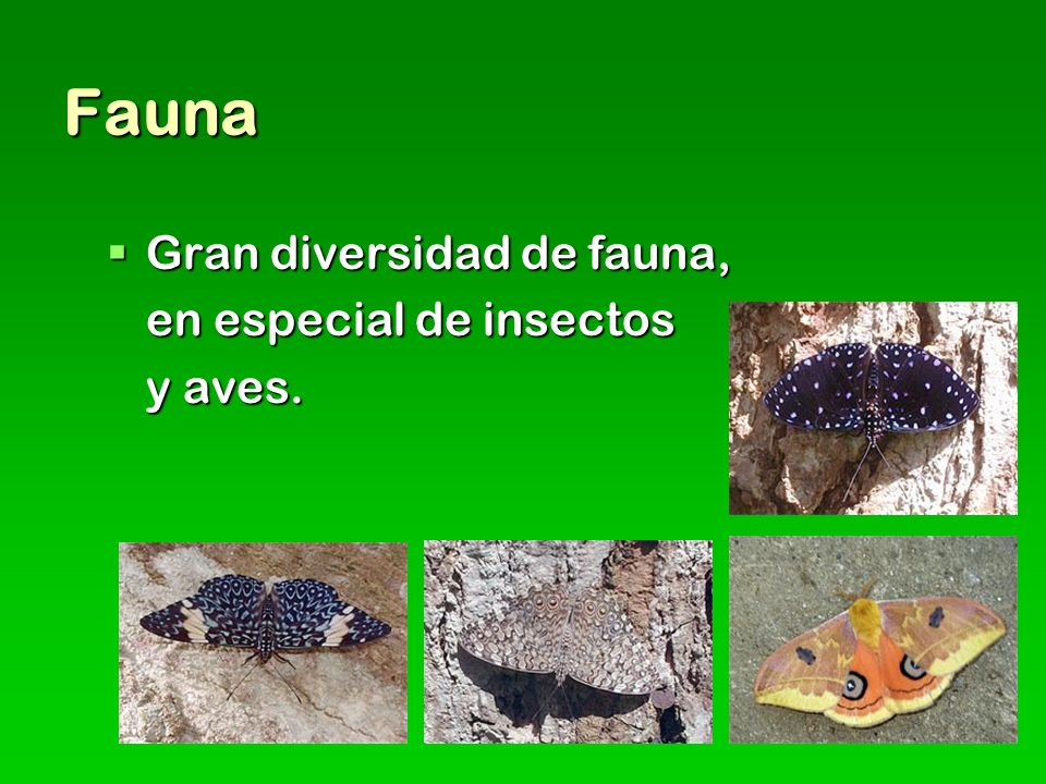 Fauna Gran diversidad de fauna, en especial de insectos y aves.