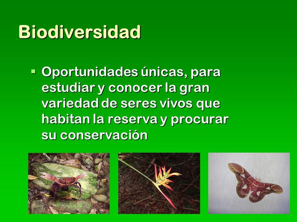 Biodiversidad Oportunidades únicas, para estudiar y conocer la gran variedad de seres vivos que habitan la reserva y procurar su conservación.