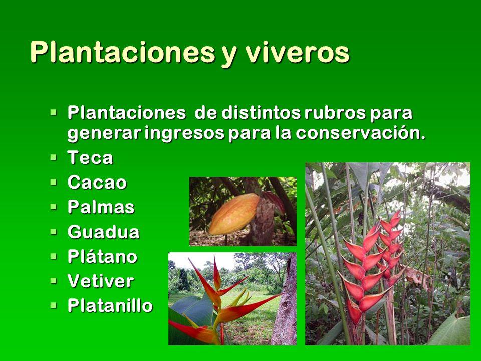 Plantaciones y viveros