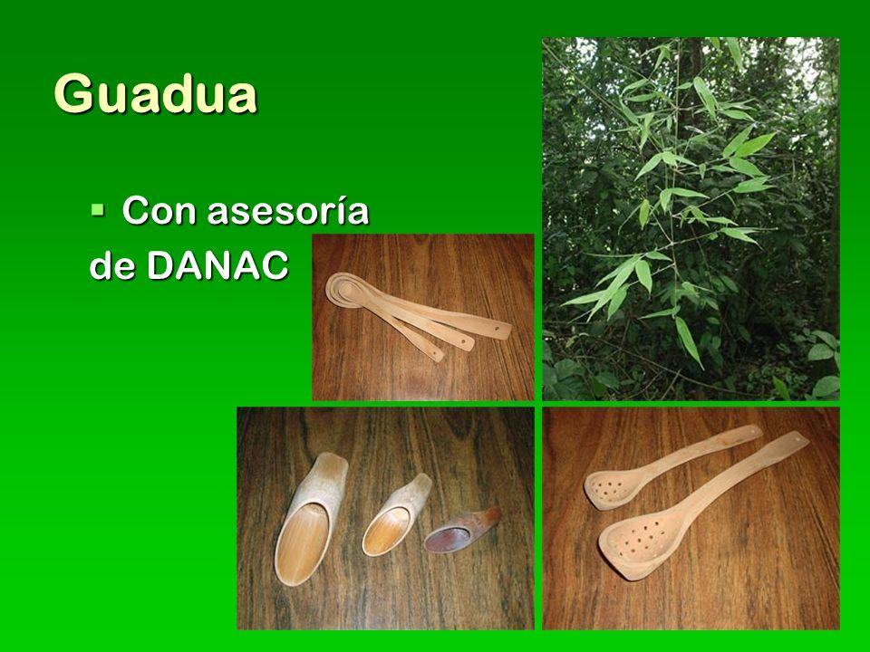 Guadua Con asesoría de DANAC