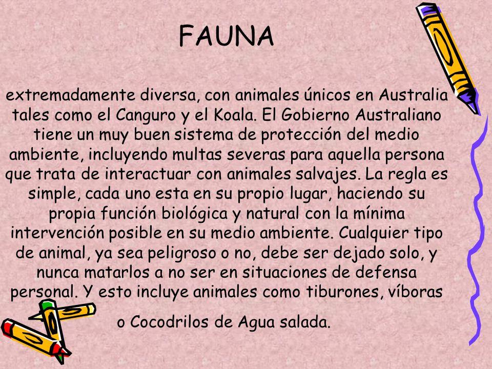 FAUNA extremadamente diversa, con animales únicos en Australia tales como el Canguro y el Koala.