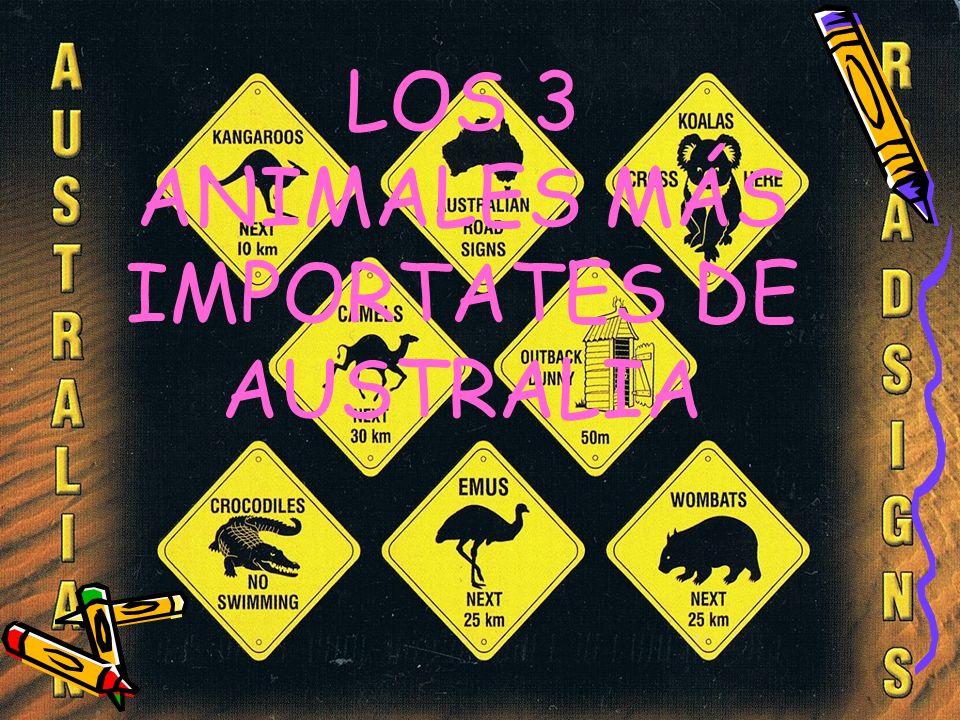 LOS 3 ANIMALES MÁS IMPORTATES DE AUSTRALIA