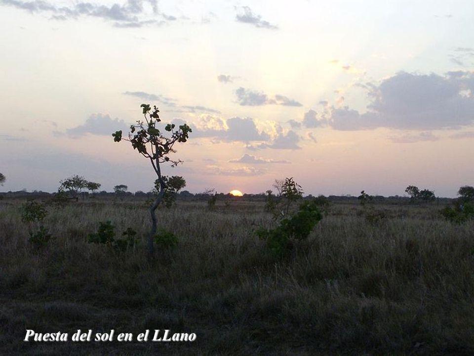 Puesta del sol en el LLano