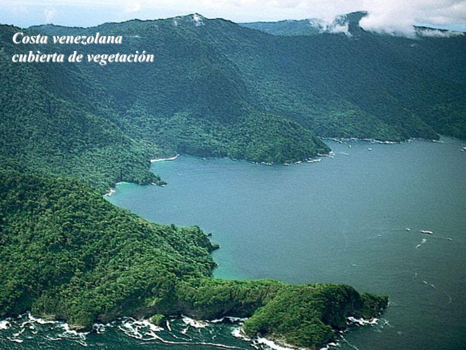Costa venezolana cubierta de vegetación