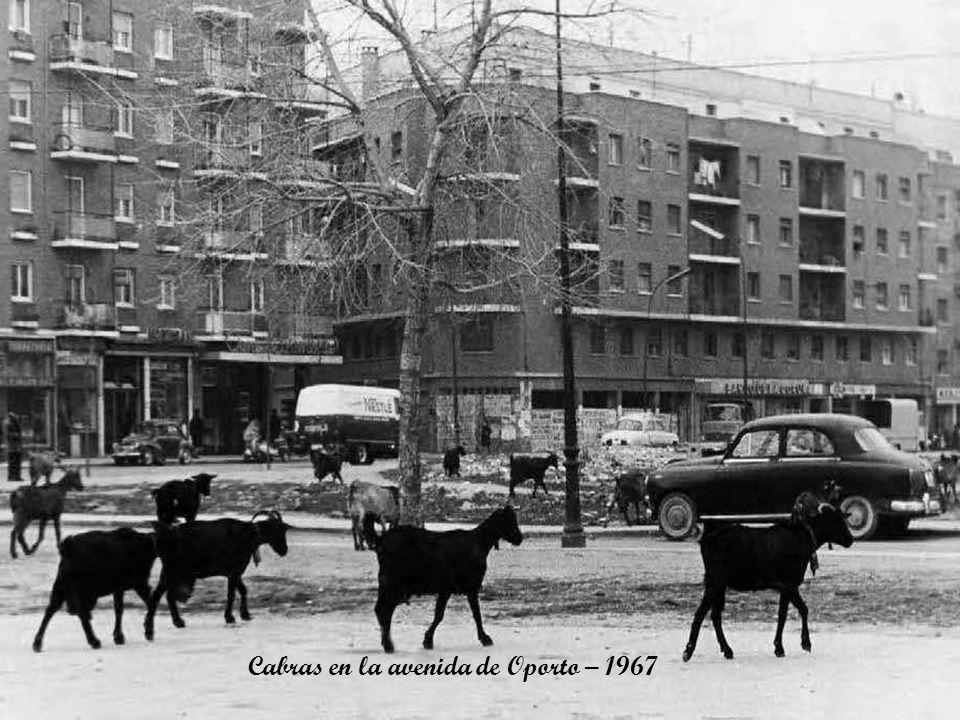 Cabras en la avenida de Oporto – 1967