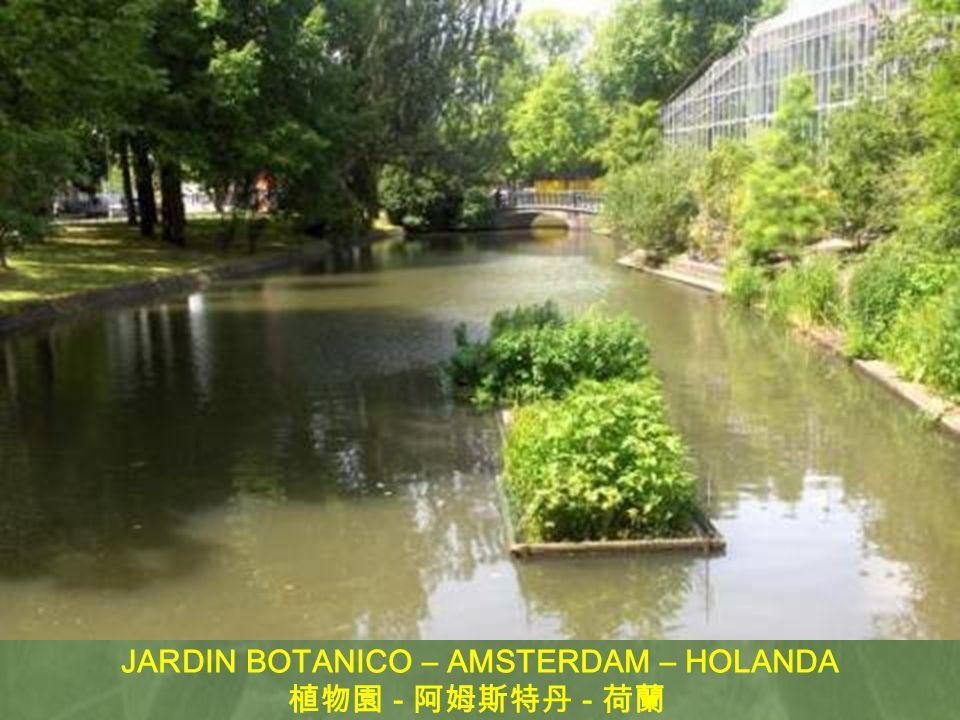 JARDIN BOTANICO – AMSTERDAM – HOLANDA
