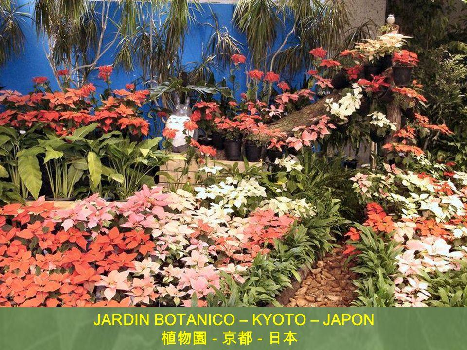 JARDIN BOTANICO – KYOTO – JAPON