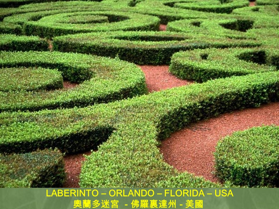 LABERINTO – ORLANDO – FLORIDA – USA