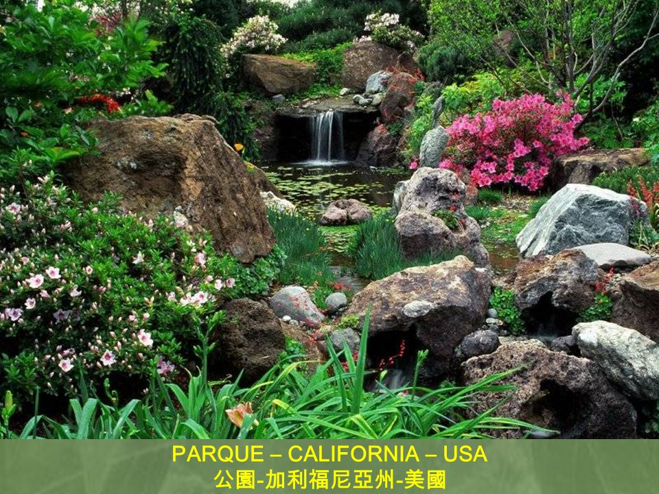 PARQUE – CALIFORNIA – USA