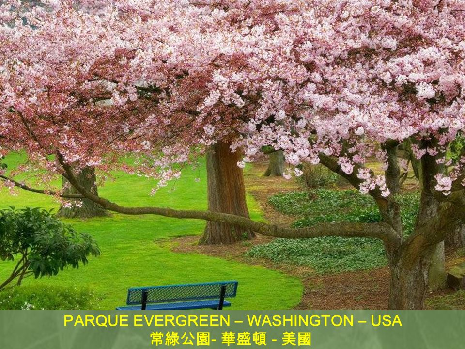 PARQUE EVERGREEN – WASHINGTON – USA