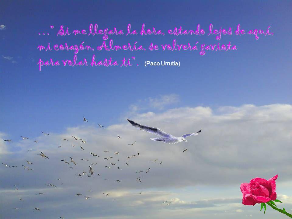 … Si me llegara la hora, estando lejos de aquí, mi corazón, Almería, se volverá gaviota para volar hasta ti .