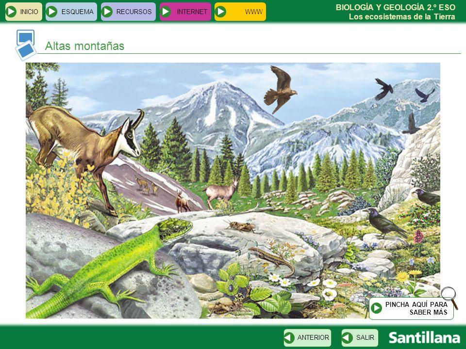 Altas montañas INICIO ESQUEMA RECURSOS INTERNET WWW