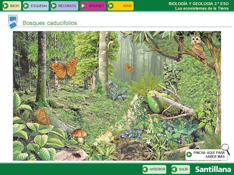 Bosques caducifolios INICIO ESQUEMA RECURSOS INTERNET WWW