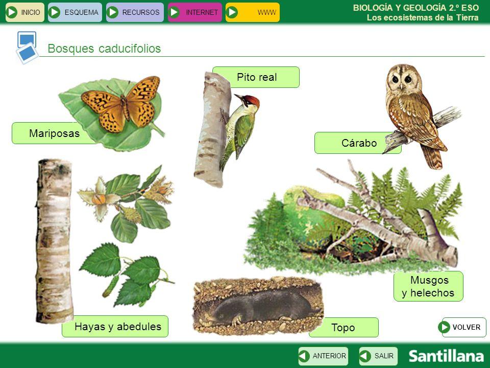 Bosques caducifolios Pito real Mariposas Cárabo Musgos y helechos