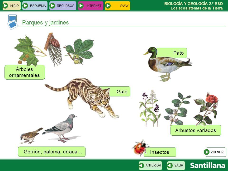 Parques y jardines Pato Árboles ornamentales Gato Arbustos variados