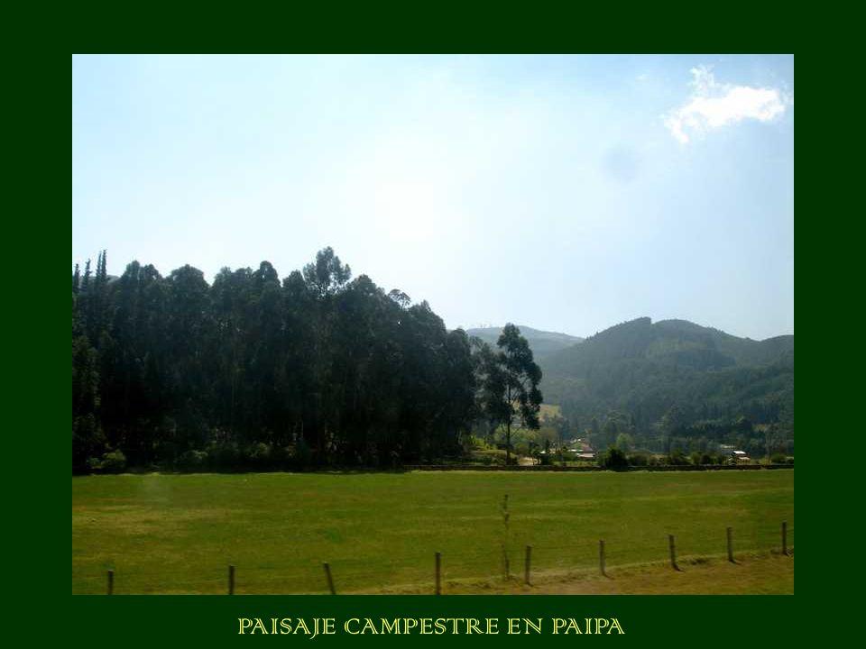 PAISAJE CAMPESTRE EN PAIPA