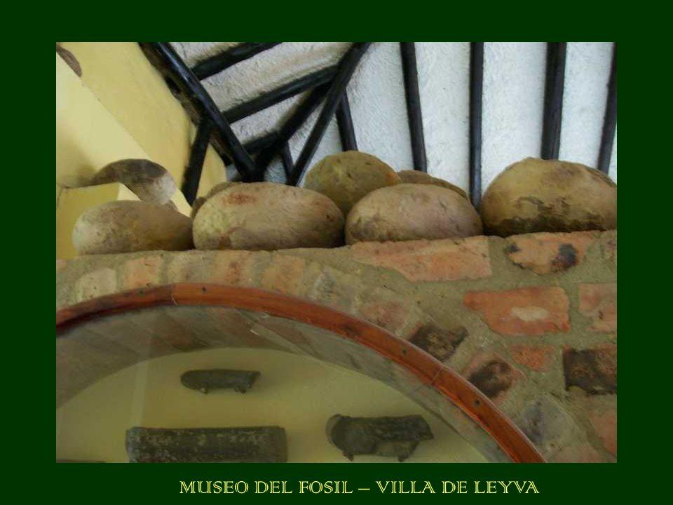 MUSEO DEL FOSIL – VILLA DE LEYVA