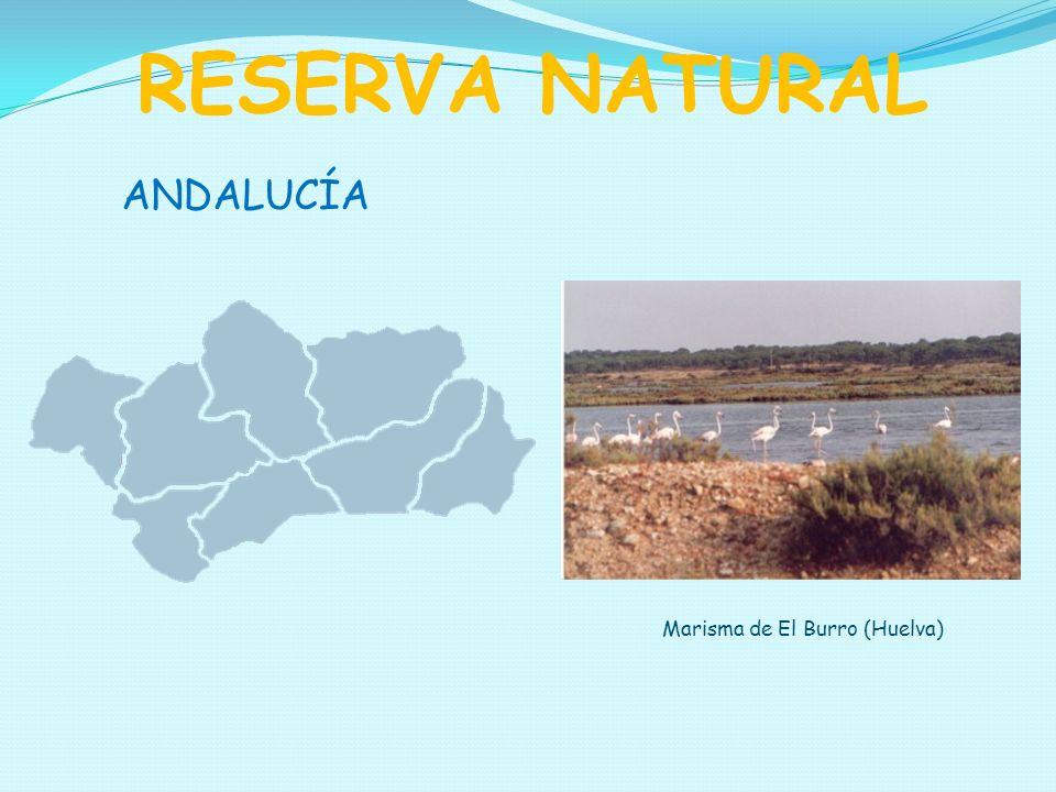 RESERVA NATURAL ANDALUCÍA Marisma de El Burro (Huelva)