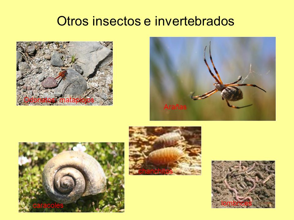 Otros insectos e invertebrados