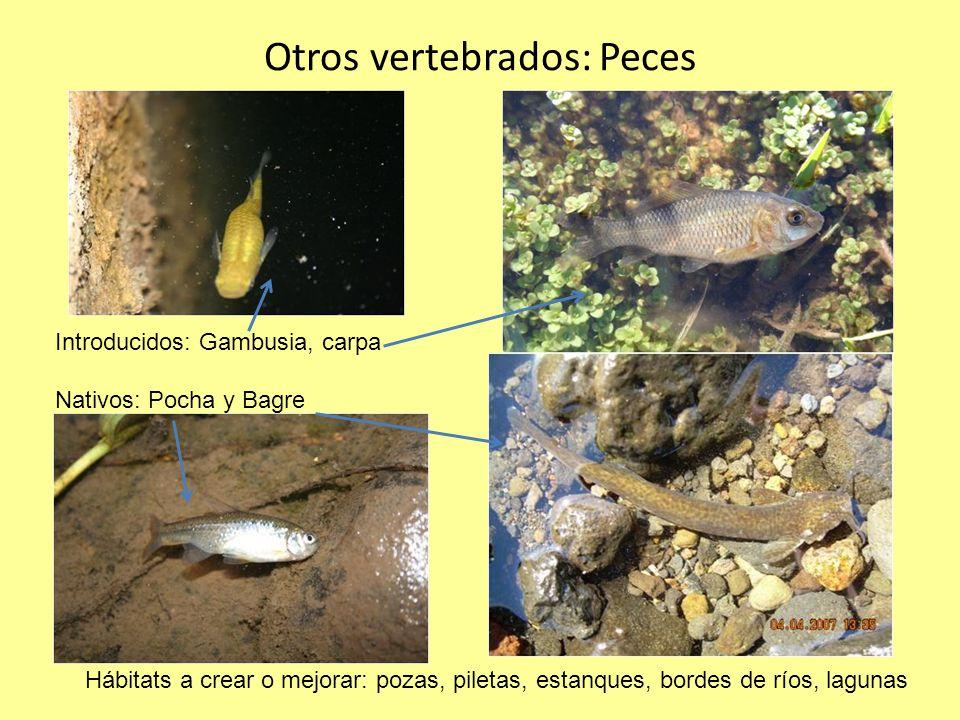Otros vertebrados: Peces