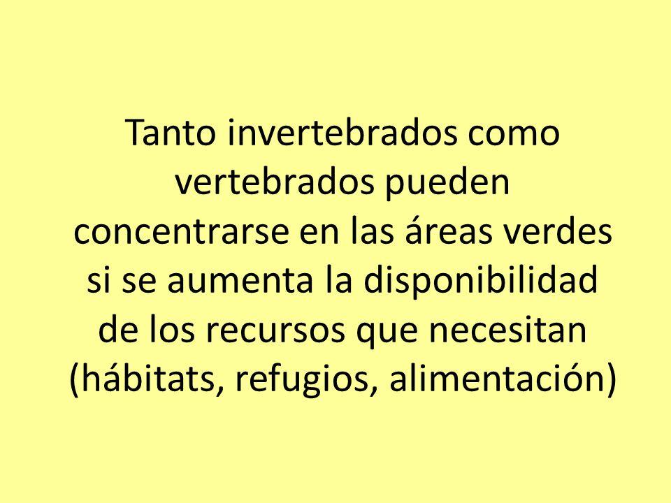 Tanto invertebrados como vertebrados pueden concentrarse en las áreas verdes si se aumenta la disponibilidad de los recursos que necesitan (hábitats, refugios, alimentación)