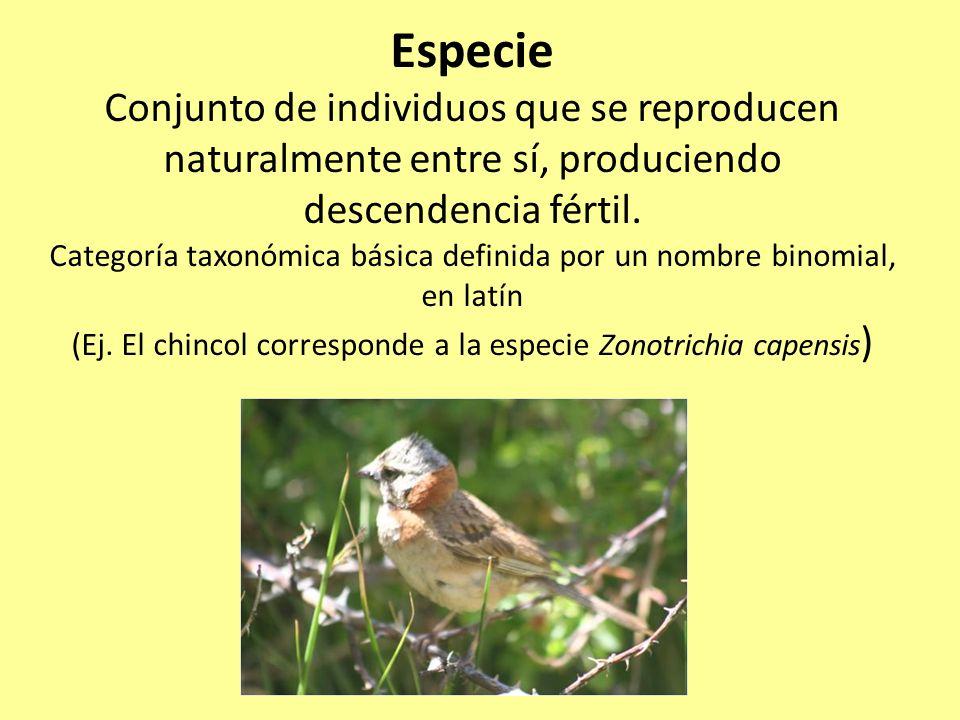 Especie Conjunto de individuos que se reproducen naturalmente entre sí, produciendo descendencia fértil.