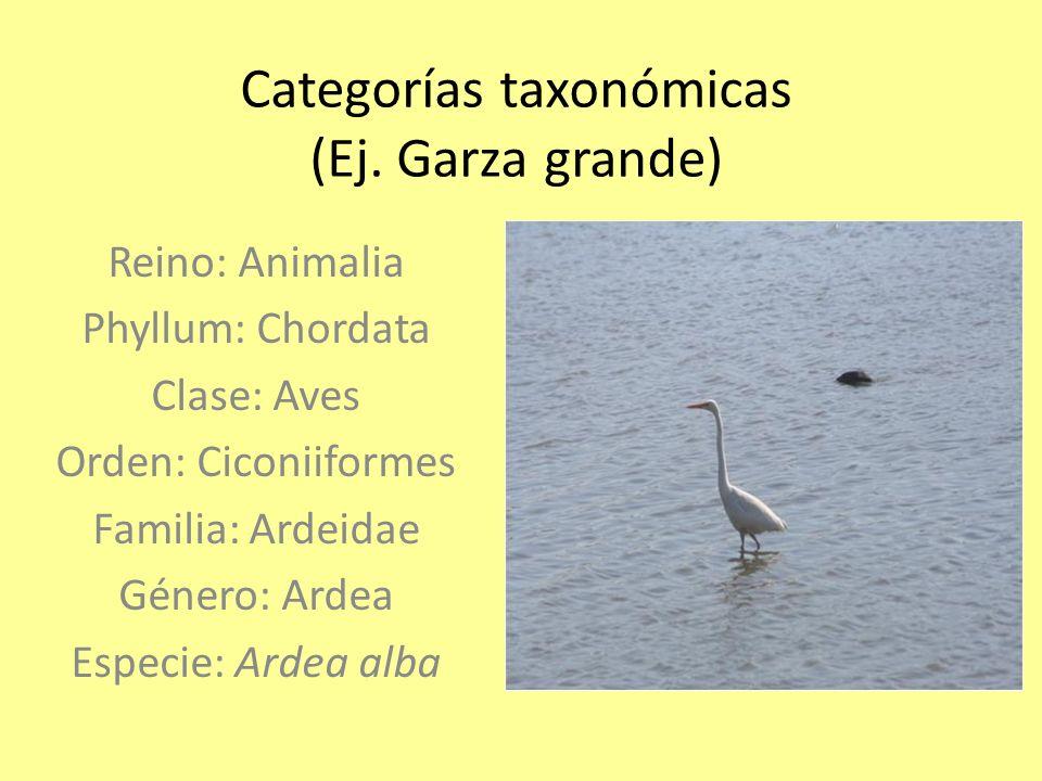 Categorías taxonómicas (Ej. Garza grande)