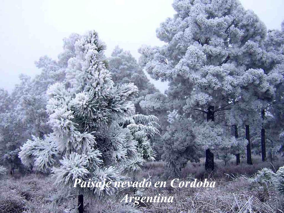 Paisaje nevado en Cordoba Argentina