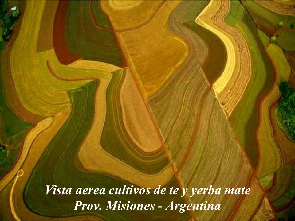 Vista aerea cultivos de te y yerba mate Prov. Misiones - Argentina