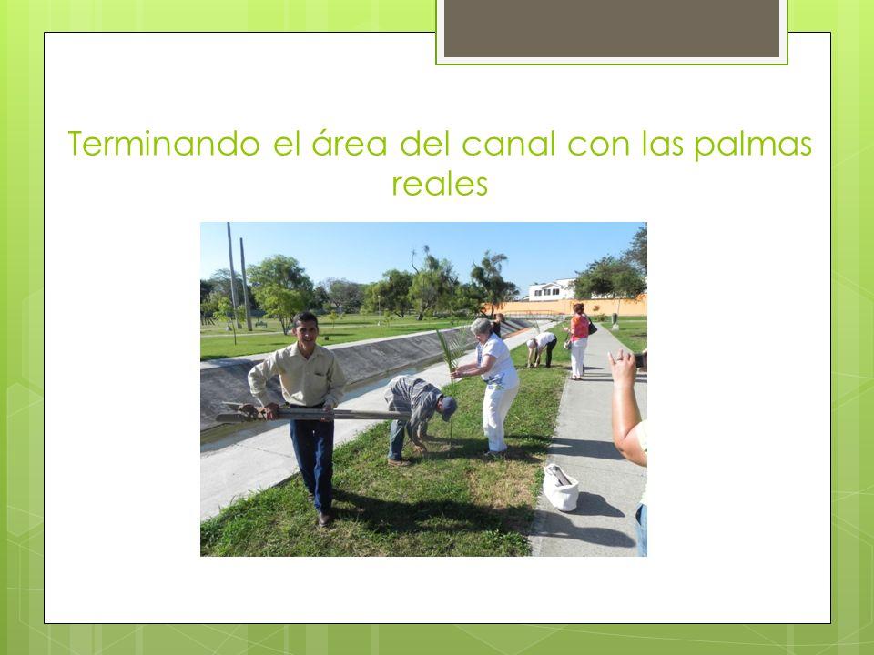 Terminando el área del canal con las palmas reales