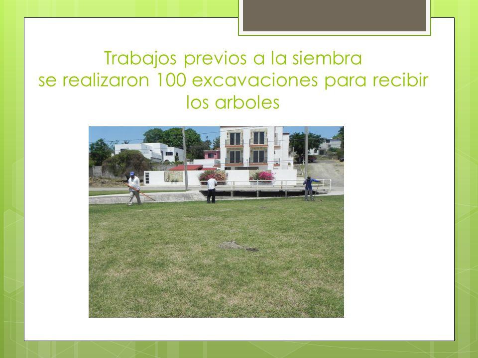 Trabajos previos a la siembra se realizaron 100 excavaciones para recibir los arboles