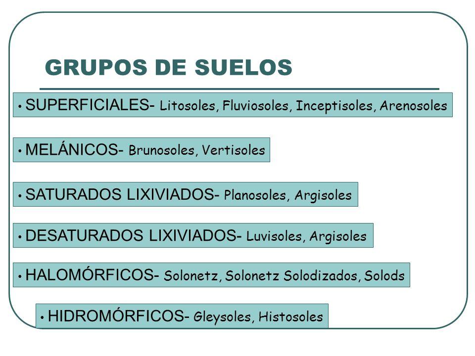 GRUPOS DE SUELOS SUPERFICIALES- Litosoles, Fluviosoles, Inceptisoles, Arenosoles. MELÁNICOS- Brunosoles, Vertisoles.