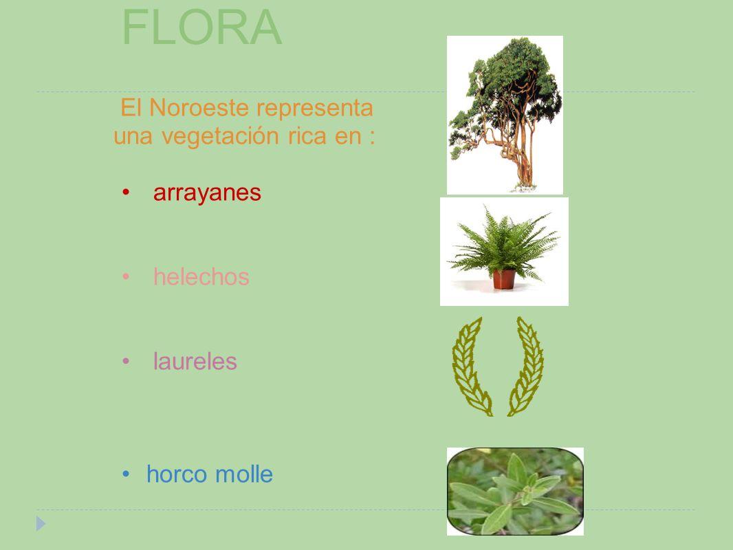 FLORA El Noroeste representa una vegetación rica en : arrayanes