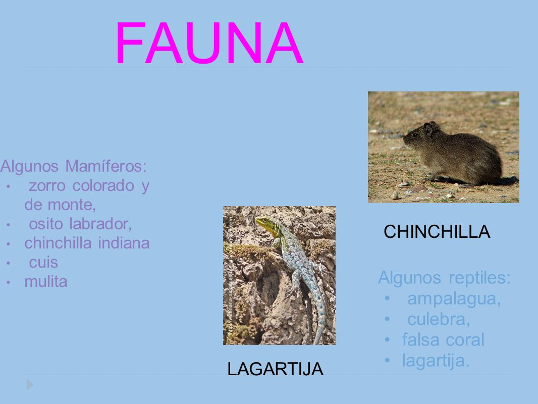 FAUNA CHINCHILLA Algunos reptiles: ampalagua, culebra, falsa coral