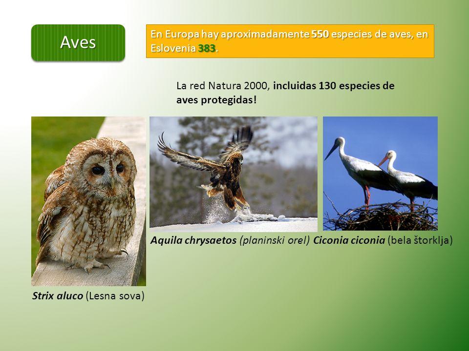 Aves En Europa hay aproximadamente 550 especies de aves, en Eslovenia 383. La red Natura 2000, incluidas 130 especies de aves protegidas!
