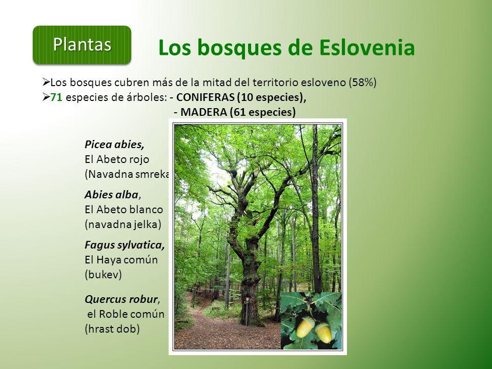 Los bosques de Eslovenia