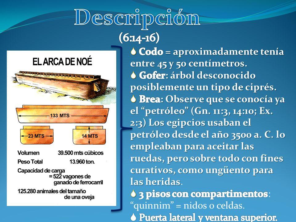 Descripción (6:14-16)  Codo = aproximadamente tenía entre 45 y 50 centímetros. Gofer: árbol desconocido posiblemente un tipo de ciprés.