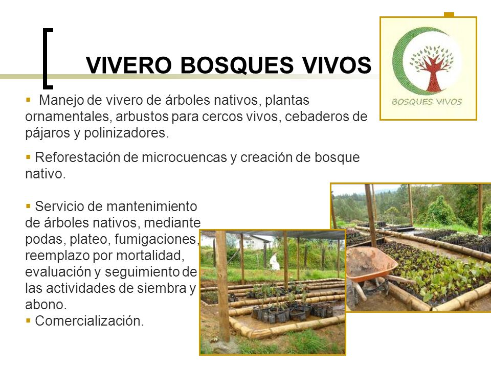 VIVERO BOSQUES VIVOS Manejo de vivero de árboles nativos, plantas ornamentales, arbustos para cercos vivos, cebaderos de pájaros y polinizadores.