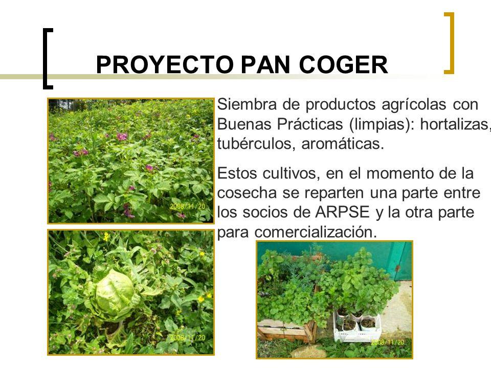PROYECTO PAN COGER Siembra de productos agrícolas con Buenas Prácticas (limpias): hortalizas, tubérculos, aromáticas.