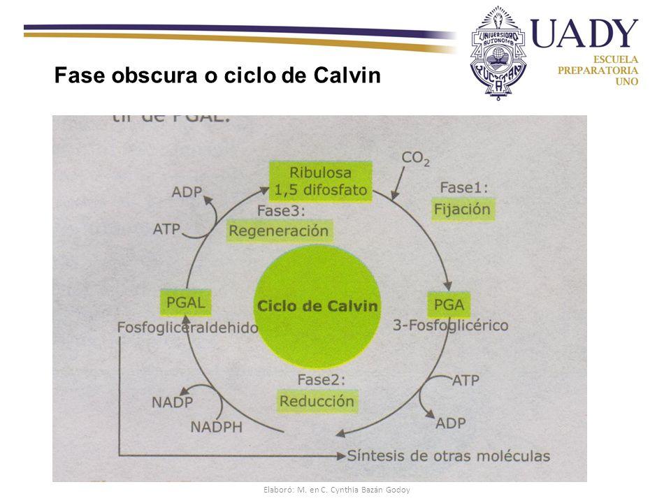 Elaboró: M. en C. Cynthia Bazán Godoy
