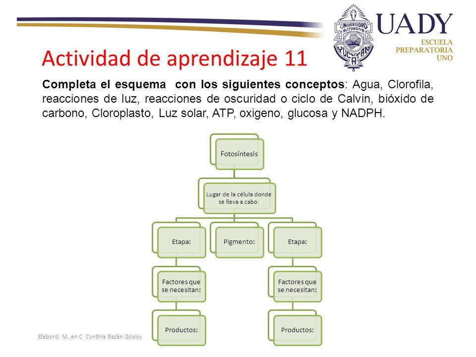 Actividad de aprendizaje 11
